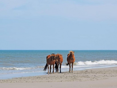 Horses in Currituck County