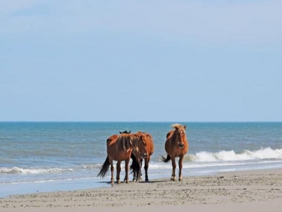 horses in Corolla, NC; Currituck County