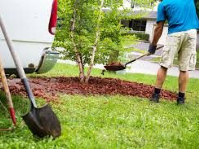 Carolina Landscaping & Tractor Service