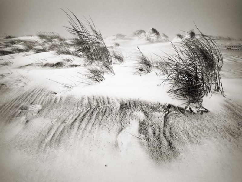 Windswept dunes and sea-grass are the signature geographical element of the Outer Banks.